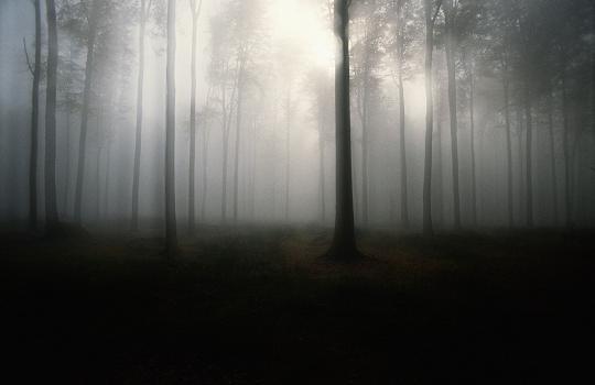 Vendo a madeira e as árvores: A psicologia do Big Data