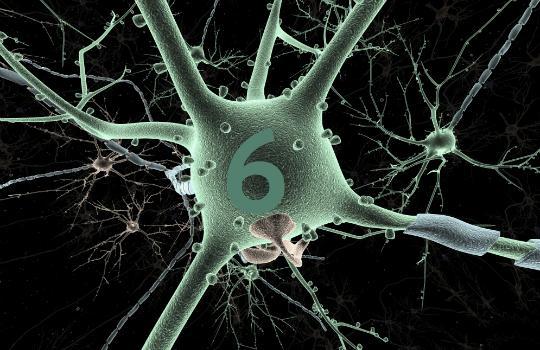 Seis coisas que você precisa saber sobre a neurociência para ajudar a desenvolver a aprendizagem