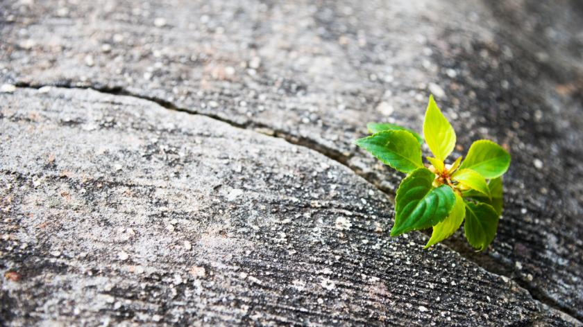 Resilience - Young plant growing out of concrete