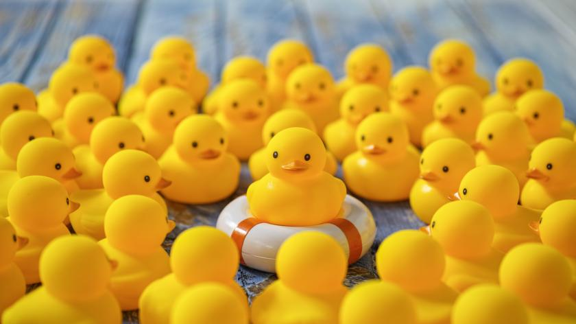 Rubber ducks gathering around a duck on a life ring