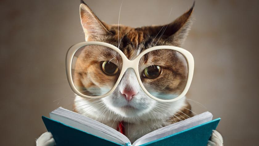 Cat in glasses holding a turquoise book and strictly looks into the camera