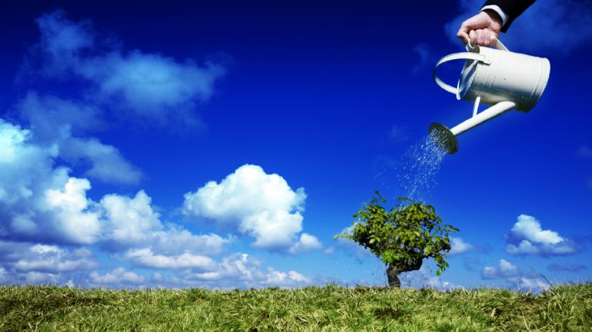 A businessman watering a tree