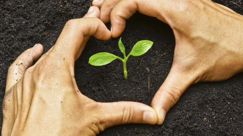 hands making a heart shape and a sapling