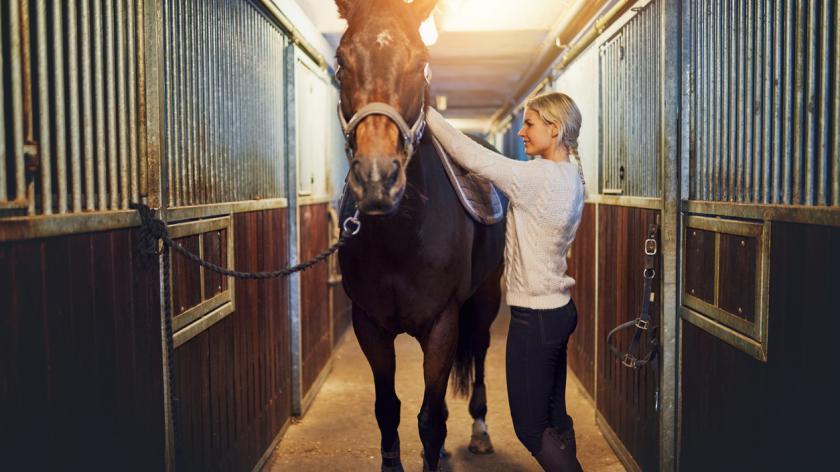 equine leadership learning